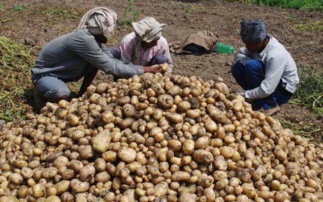 Price of Potato