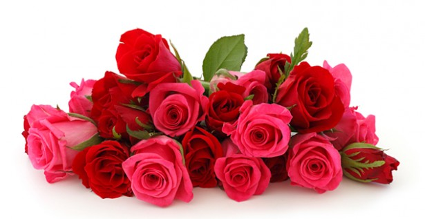 Indian rose exports